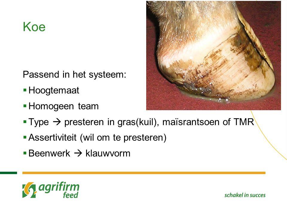 Koe Passend in het systeem:  Hoogtemaat  Homogeen team  Type  presteren in gras(kuil), maïsrantsoen of TMR  Assertiviteit (wil om te presteren) 