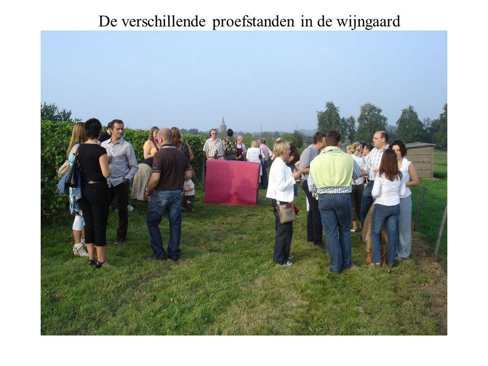 De verschillende proefstanden in de wijngaard