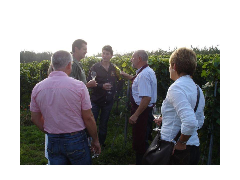 Geleide wandeling door de wijngaard …