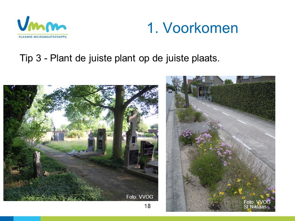 1. Voorkomen Tip 3 - Plant de juiste plant op de juiste plaats. 18 Foto: VVOG Foto: VVOG St Niklaas