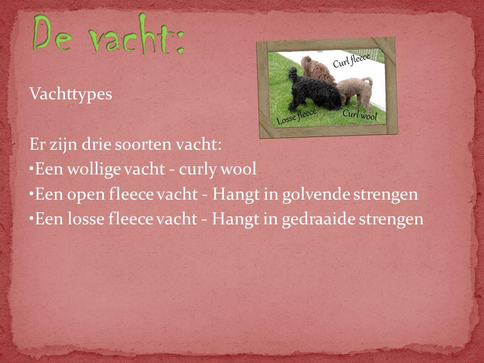 Vachttypes Er zijn drie soorten vacht: Een wollige vacht - curly wool Een open fleece vacht - Hangt in golvende strengen Een losse fleece vacht - Hangt in gedraaide strengen