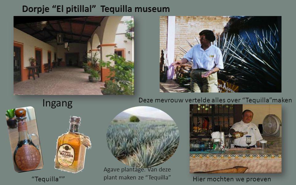 Ingang Deze mevrouw vertelde alles over Tequilla maken Tequilla Hier mochten we proeven Agave plantage.