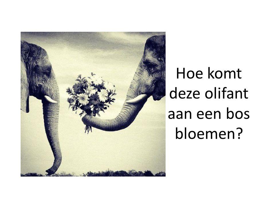 Hoe komt deze olifant aan een bos bloemen?