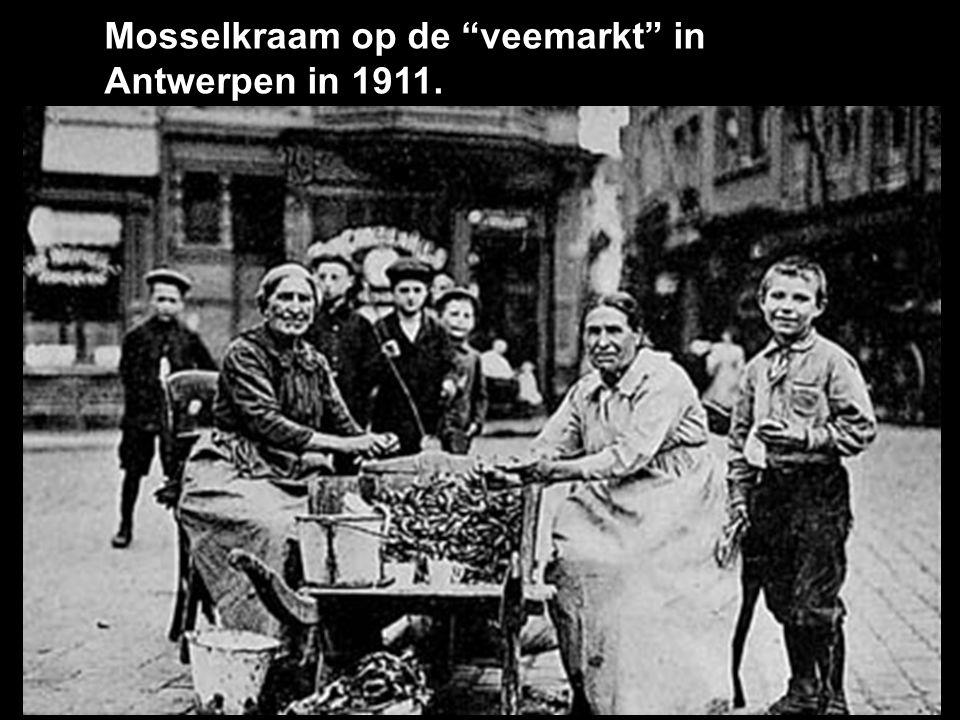 Mosselkraam op de veemarkt in Antwerpen in 1911.