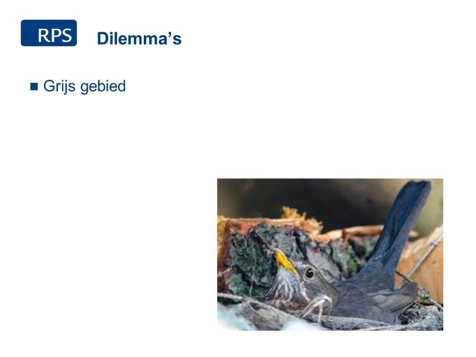Dilemma's Grijs gebied