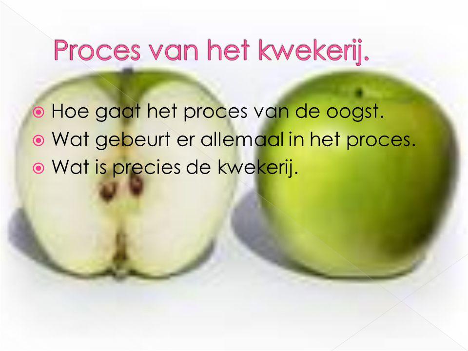 Hoe gaat het proces van de oogst.  Wat gebeurt er allemaal in het proces.  Wat is precies de kwekerij.