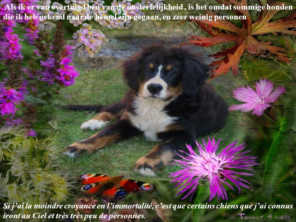 Wie niet weet wat zeep is heb nog nooit een hond gewassen Quiconque ne sait pas ce que goûte le savon n'a jamais lavé un chien.