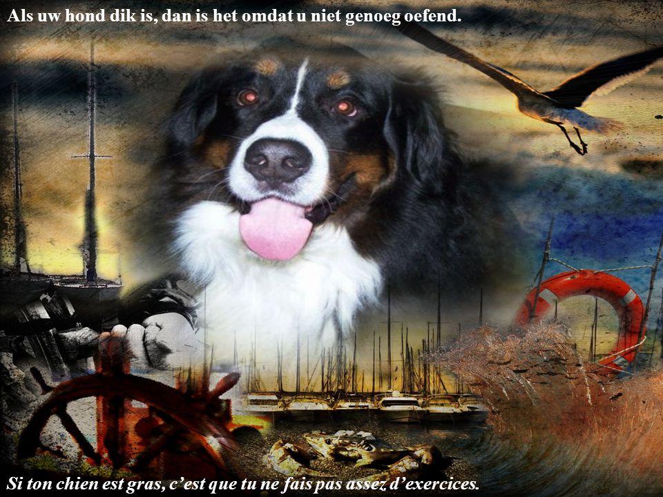 Mijn hond is bezorgd met de economie, want Alpo kost tot 3Euro het blikje. Dat is bijna 21 Euro in honden geld Mon chien s'en fait avec l'économie par