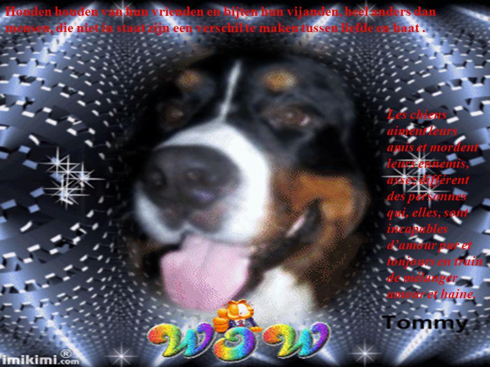 Mijn doel in het leven is een goed persoon zijn zoals mijn hond denkt dat ik ben. Mon but dans la vie est d'être une personne aussi bonne que ce que m