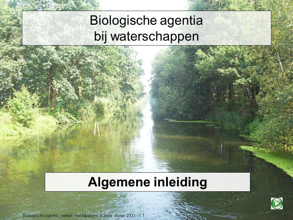 Biologische agentia_werken met kadavers & zieke dieren 2013 v1.1 Biologische agentia bij waterschappen Algemene inleiding