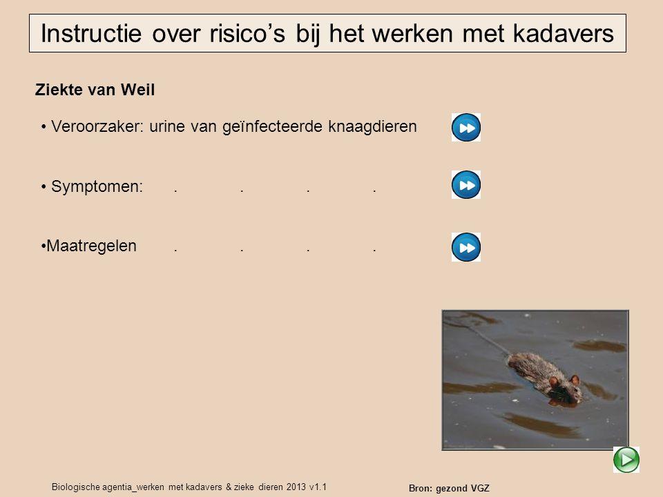 Biologische agentia_werken met kadavers & zieke dieren 2013 v1.1 Ziekte van Weil Instructie over risico's bij het werken met kadavers Bron: gezond VGZ