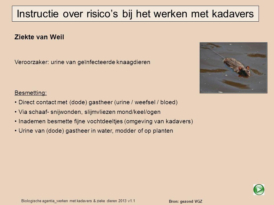 Biologische agentia_werken met kadavers & zieke dieren 2013 v1.1 Ziekte van Weil Veroorzaker: urine van geïnfecteerde knaagdieren Instructie over risi