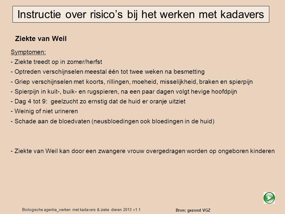 Biologische agentia_werken met kadavers & zieke dieren 2013 v1.1 Ziekte van Weil Instructie over risico's bij het werken met kadavers Symptomen: - Zie