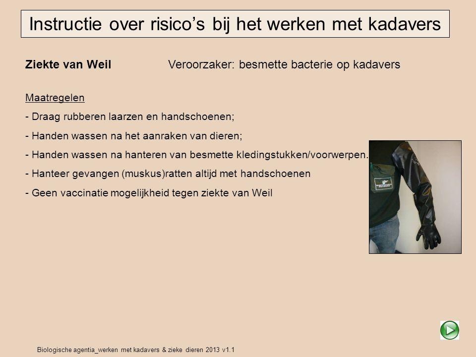 Biologische agentia_werken met kadavers & zieke dieren 2013 v1.1 Ziekte van Weil Veroorzaker: besmette bacterie op kadavers Instructie over risico's b