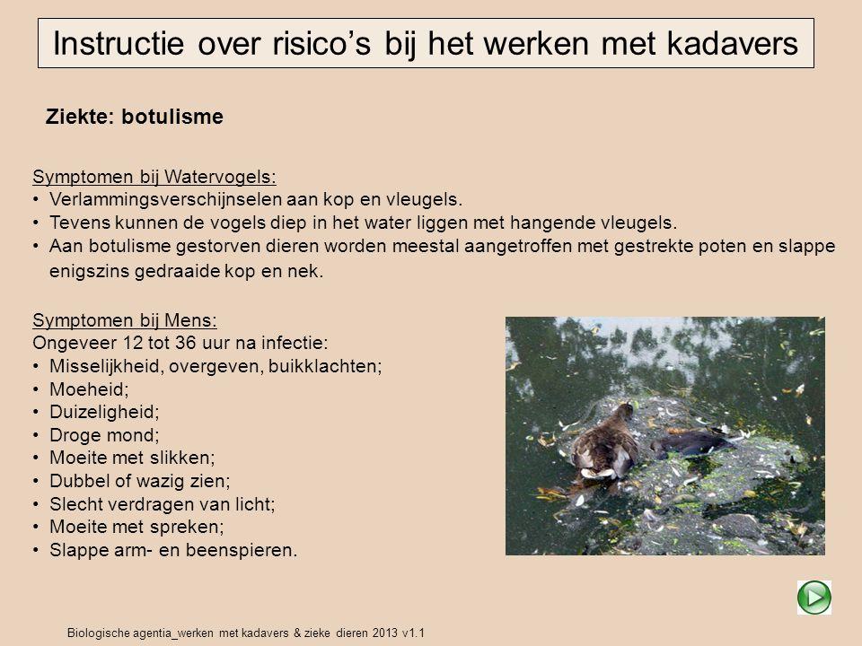 Biologische agentia_werken met kadavers & zieke dieren 2013 v1.1 Ziekte: botulisme Instructie over risico's bij het werken met kadavers Symptomen bij Watervogels: Verlammingsverschijnselen aan kop en vleugels.