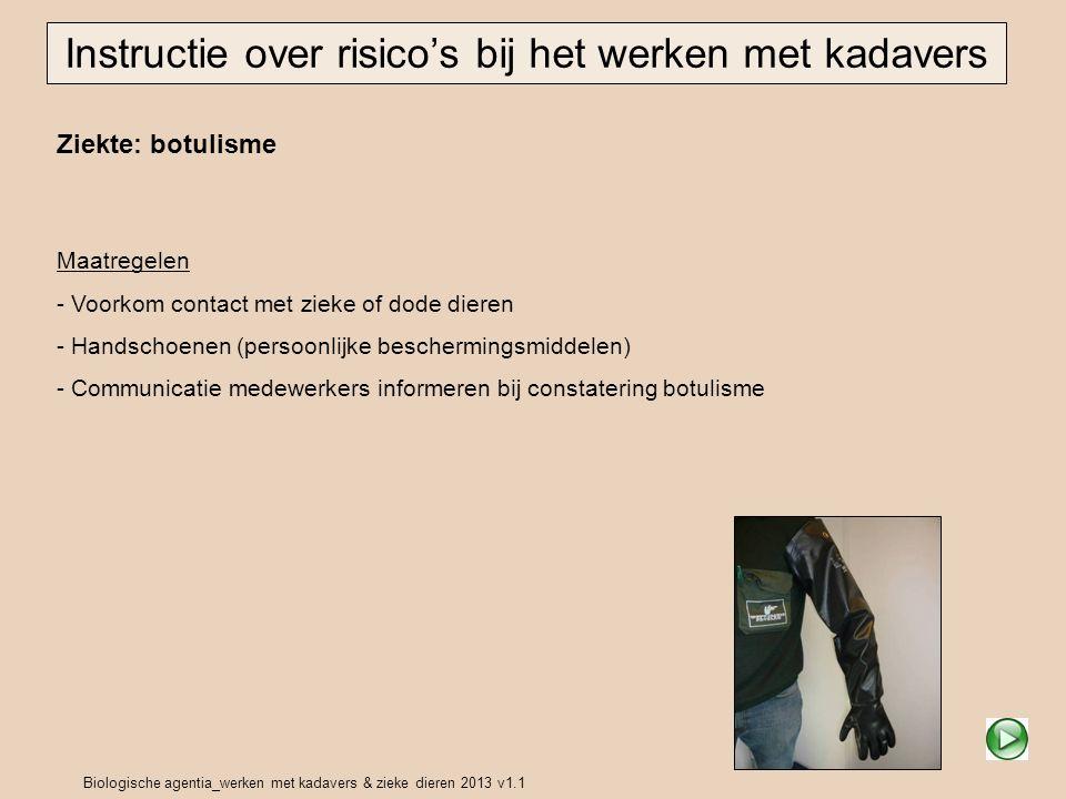 Biologische agentia_werken met kadavers & zieke dieren 2013 v1.1 Ziekte: botulisme Instructie over risico's bij het werken met kadavers Maatregelen -