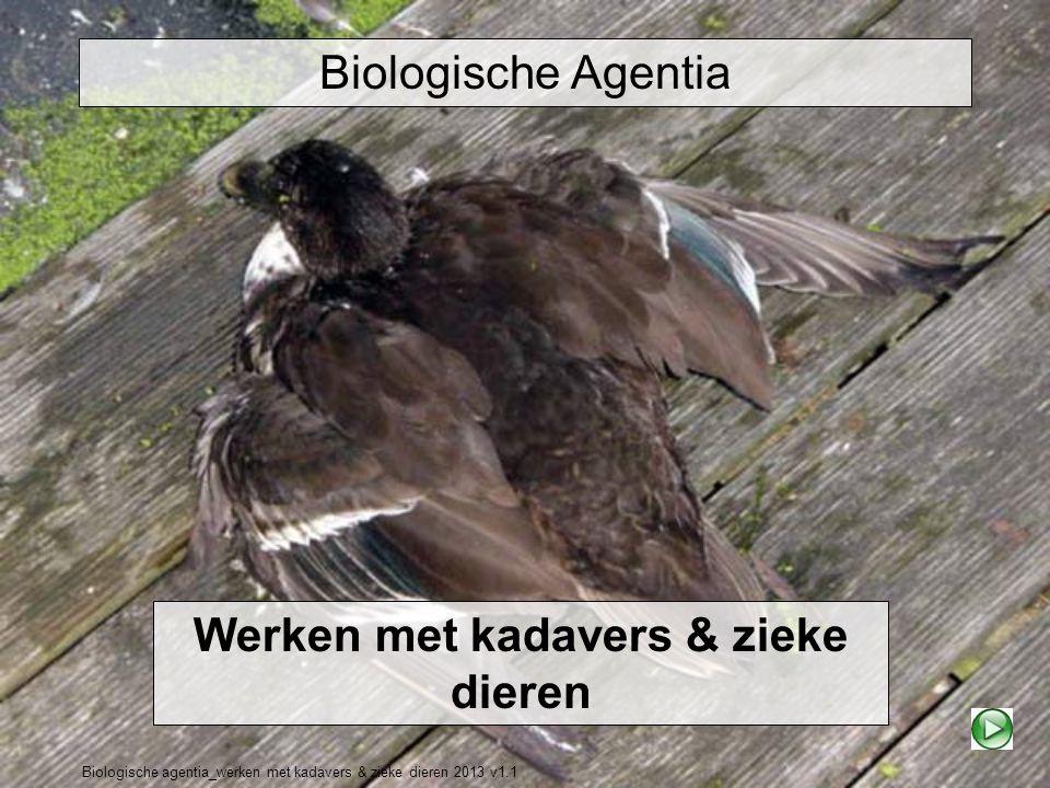 Biologische agentia_werken met kadavers & zieke dieren 2013 v1.1 Biologische Agentia Werken met kadavers & zieke dieren