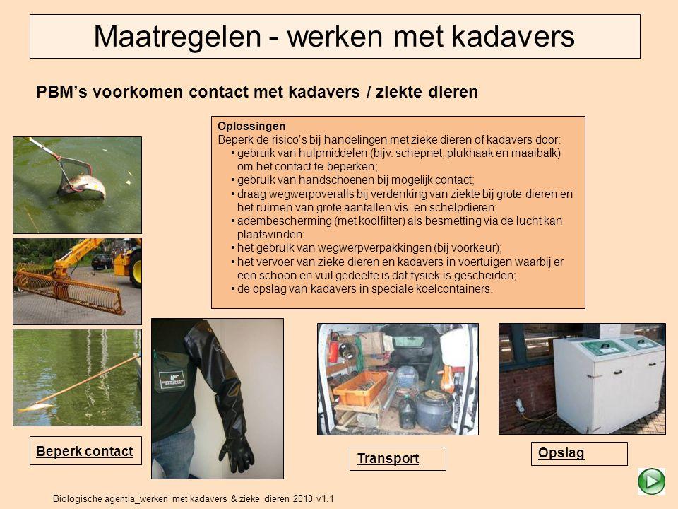 Biologische agentia_werken met kadavers & zieke dieren 2013 v1.1 PBM's voorkomen contact met kadavers / ziekte dieren Beperk contact Transport Opslag