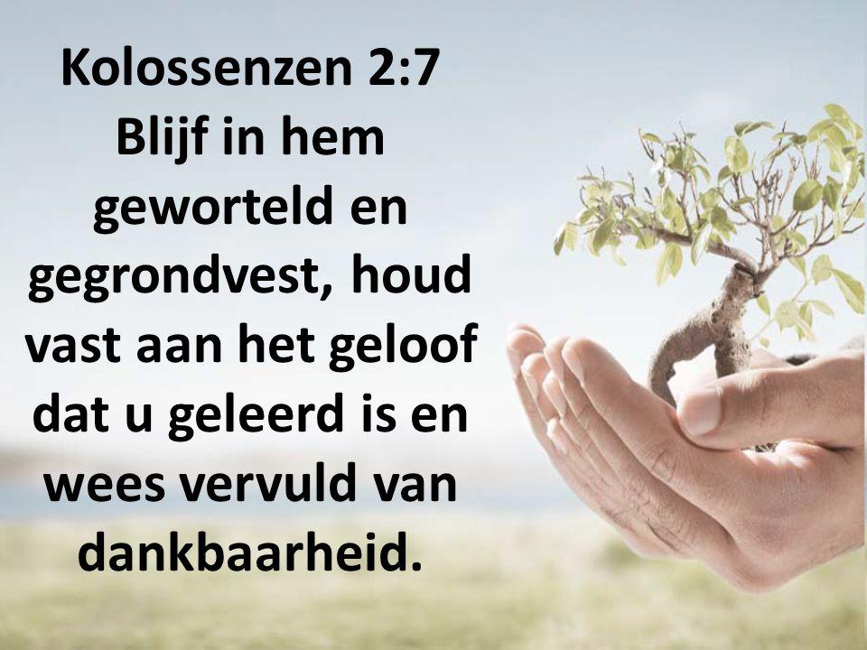 Kolossenzen 2:7 Blijf in hem geworteld en gegrondvest, houd vast aan het geloof dat u geleerd is en wees vervuld van dankbaarheid.