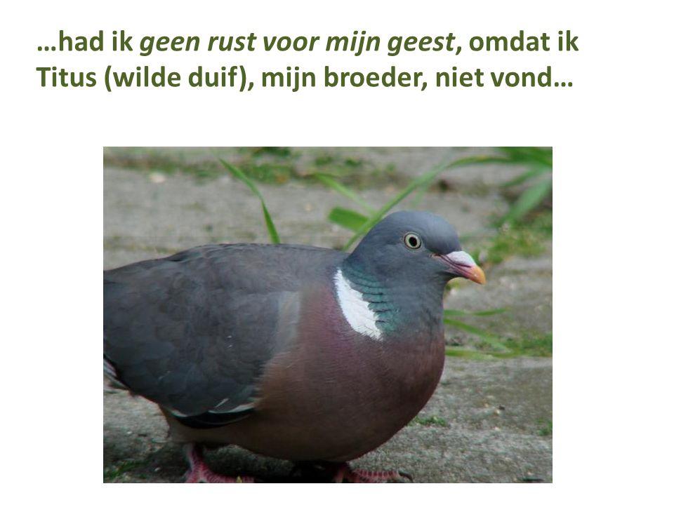…had ik geen rust voor mijn geest, omdat ik Titus (wilde duif), mijn broeder, niet vond…