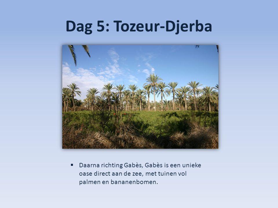 Dag 5: Tozeur-Djerba  Daarna richting Gabès, Gabès is een unieke oase direct aan de zee, met tuinen vol palmen en bananenbomen.