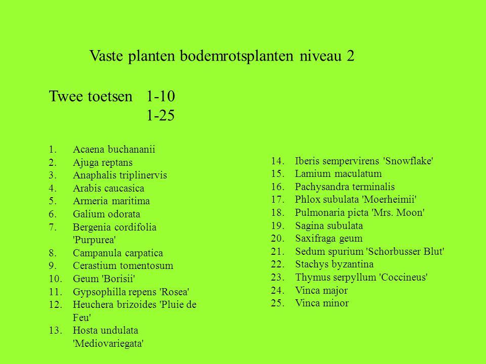 1.Acaena buchananii 2.Ajuga reptans 3.Anaphalis triplinervis 4.Arabis caucasica 5.Armeria maritima 6.Galium odorata 7.Bergenia cordifolia Purpurea 8.Campanula carpatica 9.Cerastium tomentosum 10.Geum Borisii 11.Gypsophilla repens Rosea 12.Heuchera brizoides Pluie de Feu 13.Hosta undulata Mediovariegata 14.Iberis sempervirens Snowflake 15.Lamium maculatum 16.Pachysandra terminalis 17.Phlox subulata Moerheimii 18.Pulmonaria picta Mrs.