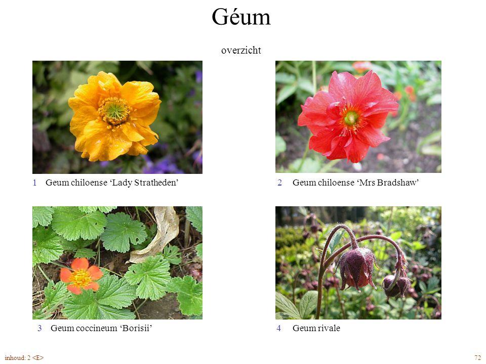 Géum overzicht 72inhoud: 2 Geum chiloense 'Mrs Bradshaw'Geum chiloense 'Lady Stratheden' Geum coccineum 'Borisii' 12 3Geum rivale4
