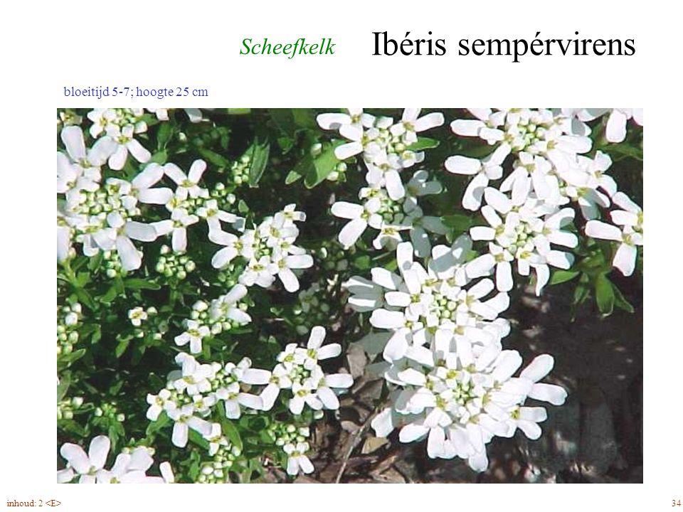Ibéris sempérvirens 34inhoud: 2 bloeitijd 5-7; hoogte 25 cm Scheefkelk
