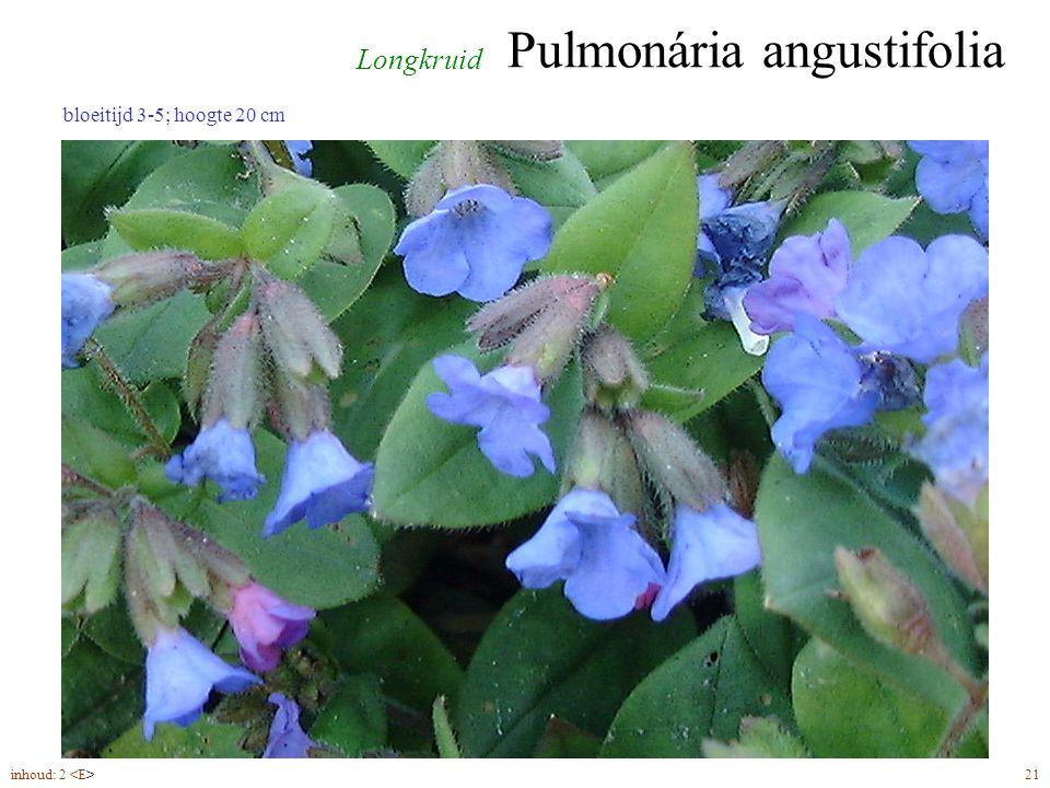Pulmonária angustifolia inhoud: 2 21 Longkruid bloeitijd 3-5; hoogte 20 cm