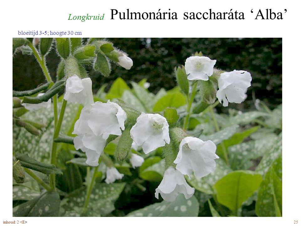 Pulmonária saccharáta 'Alba' inhoud: 2 25 Longkruid bloeitijd 3-5; hoogte 30 cm