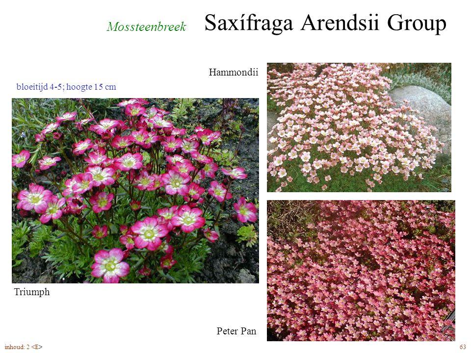 Saxífraga Arendsii Group inhoud: 2 63 bloeitijd 4-5; hoogte 15 cm Mossteenbreek Triumph Hammondii Peter Pan