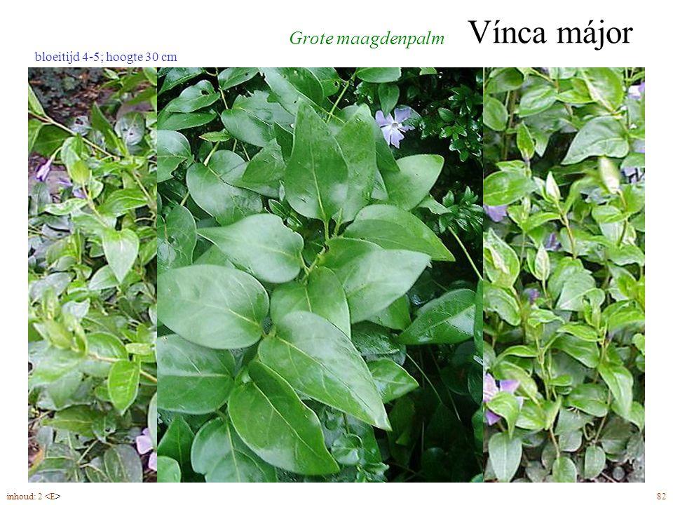 Vínca májor inhoud: 2 82 bloeitijd 4-5; hoogte 30 cm Grote maagdenpalm