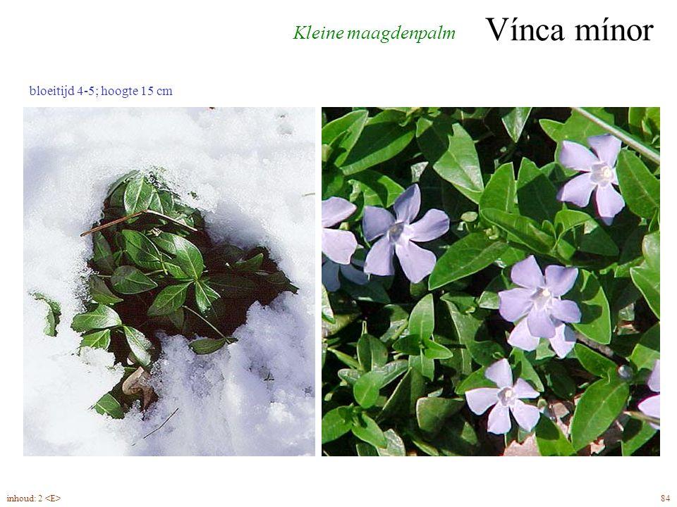 Vínca mínor 84inhoud: 2 Kleine maagdenpalm bloeitijd 4-5; hoogte 15 cm