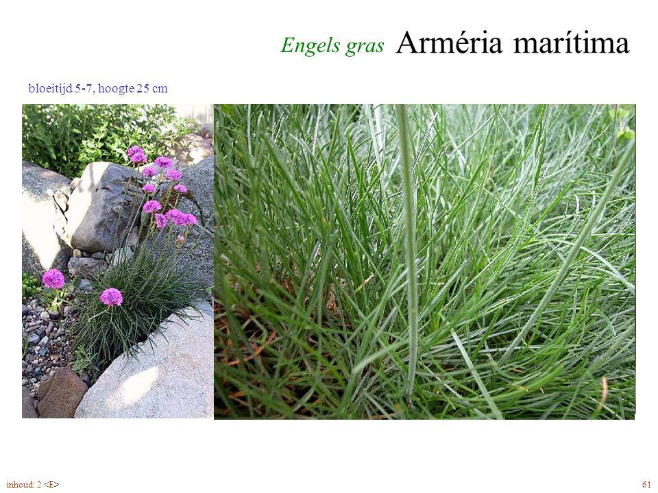 Bergénia cordifólia 4inhoud: 2 bloeitijd 4-5; hoogte 50 cm Schoenlappersplant