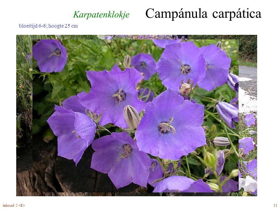 Campánula carpática 11inhoud: 2 bloeitijd 6-8; hoogte 25 cm Karpatenklokje