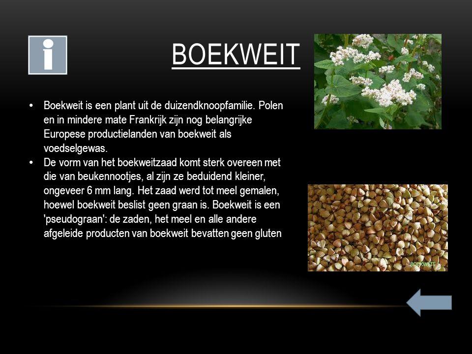 BOEKWEIT Boekweit is een plant uit de duizendknoopfamilie. Polen en in mindere mate Frankrijk zijn nog belangrijke Europese productielanden van boekwe