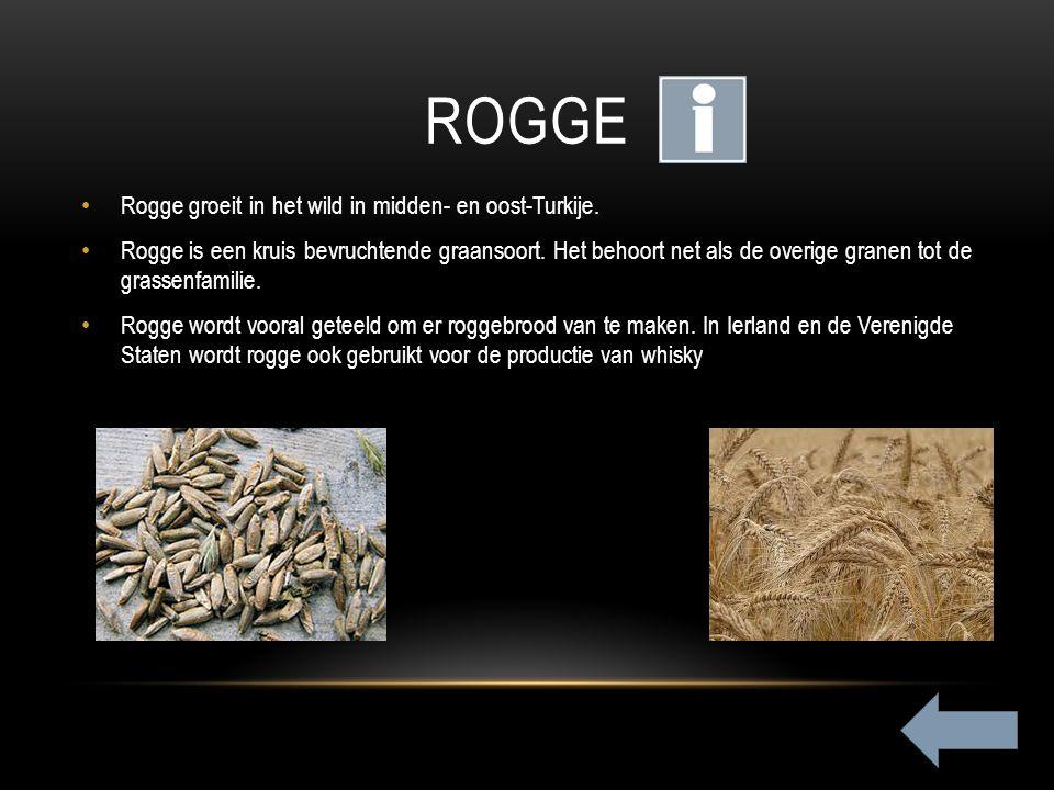 ROGGE Rogge groeit in het wild in midden- en oost-Turkije. Rogge is een kruis bevruchtende graansoort. Het behoort net als de overige granen tot de gr