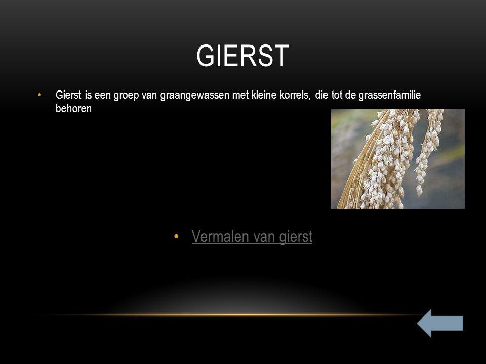GIERST Gierst is een groep van graangewassen met kleine korrels, die tot de grassenfamilie behoren Vermalen van gierst