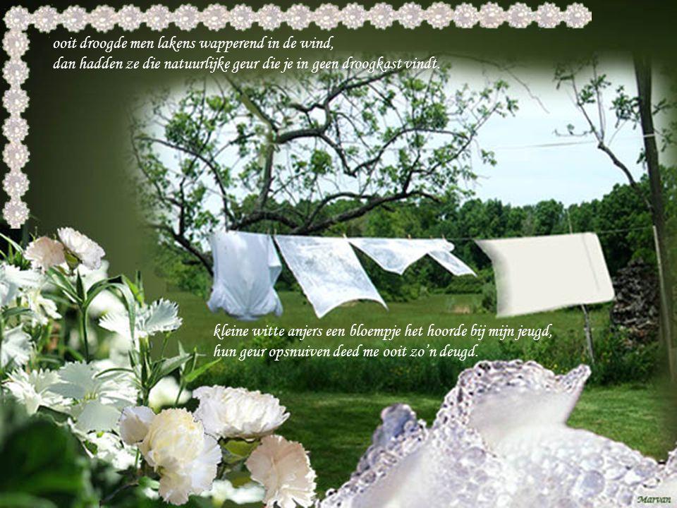 kleine witte anjers een bloempje het hoorde bij mijn jeugd, hun geur opsnuiven deed me ooit zo'n deugd.