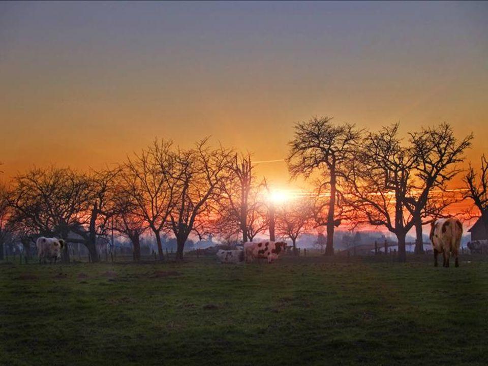 Midden in Vlaanderen Verscholen tussen de sparrebossen Ligt een klein dorpje Verdeeld in allemaal kleine boerderijtjes De een wat groter de de ander n
