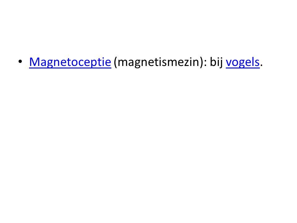 Magnetoceptie (magnetismezin): bij vogels. Magnetoceptievogels