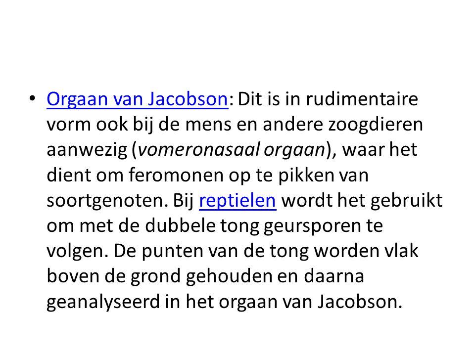 Orgaan van Jacobson: Dit is in rudimentaire vorm ook bij de mens en andere zoogdieren aanwezig (vomeronasaal orgaan), waar het dient om feromonen op t