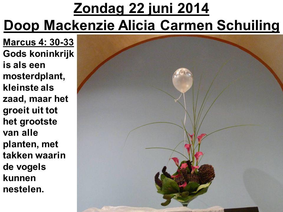 Zondag 22 juni 2014 Doop Mackenzie Alicia Carmen Schuiling Marcus 4: 30-33 Gods koninkrijk is als een mosterdplant, kleinste als zaad, maar het groeit