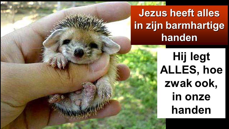 Jezus heeft alles in zijn barmhartige handen Hij legt ALLES, hoe zwak ook, in onze handen