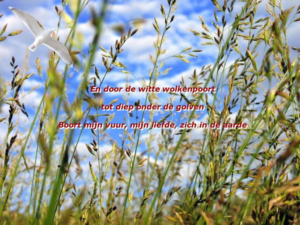 Daar wil ik zijn alleen met jou En stralen in het hemelblauw