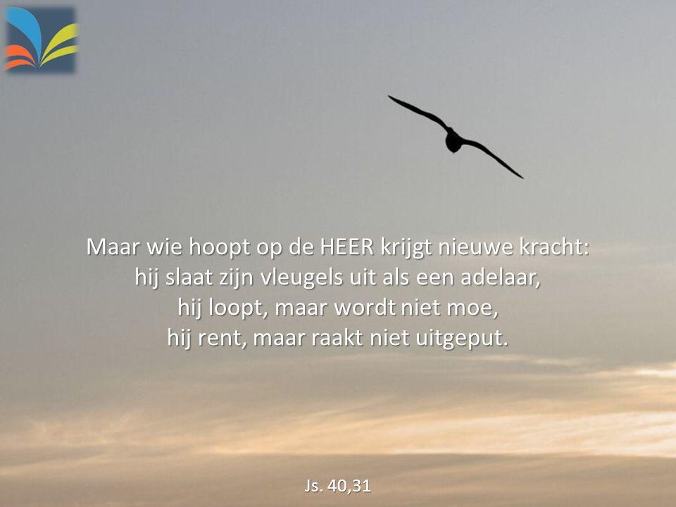 Maar wie hoopt op de HEER krijgt nieuwe kracht: hij slaat zijn vleugels uit als een adelaar, hij loopt, maar wordt niet moe, hij rent, maar raakt niet