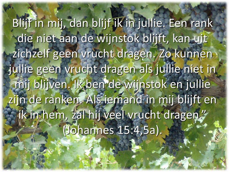 Blijf in mij, dan blijf ik in jullie. Een rank die niet aan de wijnstok blijft, kan uit zichzelf geen vrucht dragen. Zo kunnen jullie geen vrucht drag