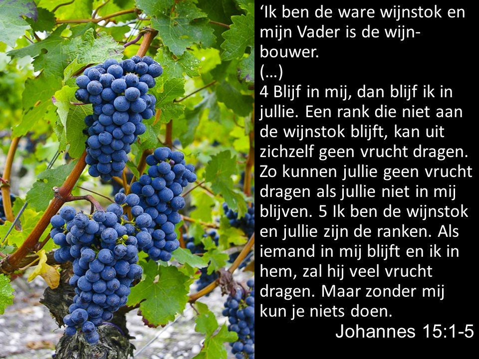 'Ik ben de ware wijnstok en mijn Vader is de wijn- bouwer. (…) 4 Blijf in mij, dan blijf ik in jullie. Een rank die niet aan de wijnstok blijft, kan u