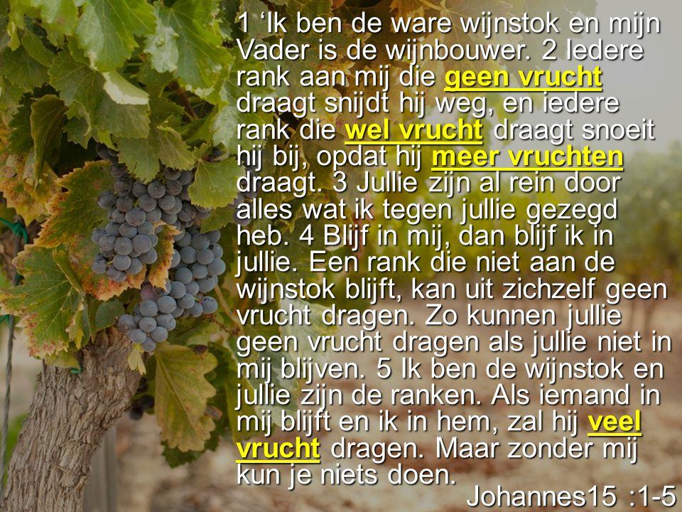 1 'Ik ben de ware wijnstok en mijn Vader is de wijnbouwer. 2 Iedere rank aan mij die geen vrucht draagt snijdt hij weg, en iedere rank die wel vrucht