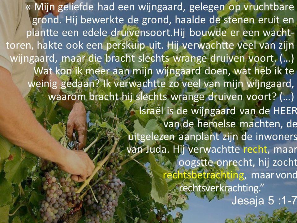 « Mijn geliefde had een wijngaard, gelegen op vruchtbare grond. Hij bewerkte de grond, haalde de stenen eruit en plantte een edele druivensoort.Hij bo